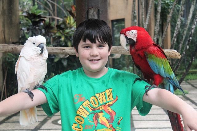 Visiting Bali with a 10-year-old boy: parrots at Bali Bird Park.