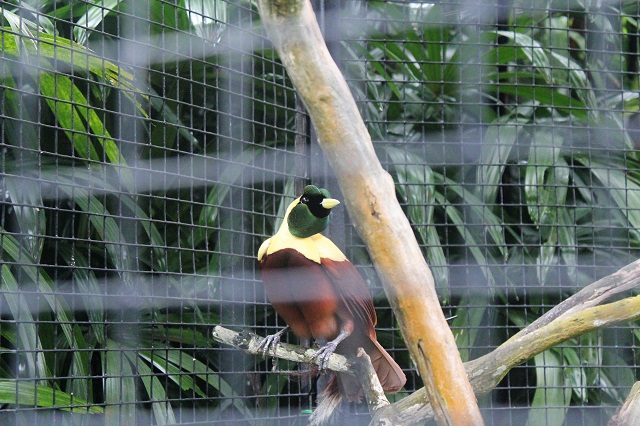 Visiting Bali with a 10-year-old boy: Bali Bird Park: Bird of Paradise