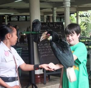 Visiting Bali with a 10-year-old boy: Bali Bird Park: bird show