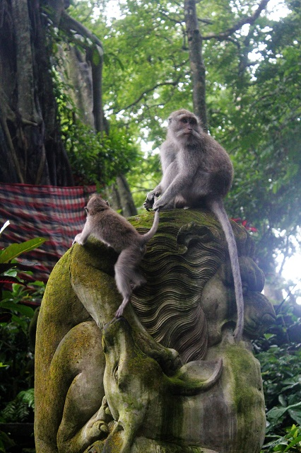 Visiting Bali with a 10-year-old boy: Ubud Moneky Forest: chained