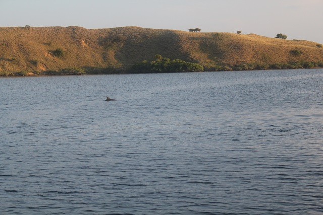 Two Worlds Treasures - dolphin in the morning at Gili Lawa, Labuan Bajo, Flores, Indonesia.