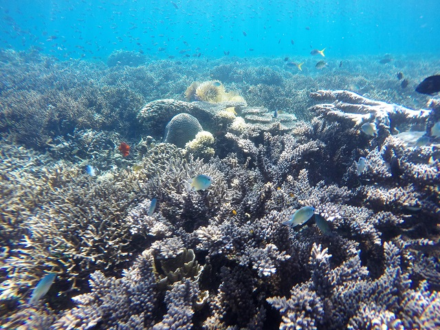 Island Hopping in Flores, Indonesia - Day 3 - wonderful underwater - Siaba Island