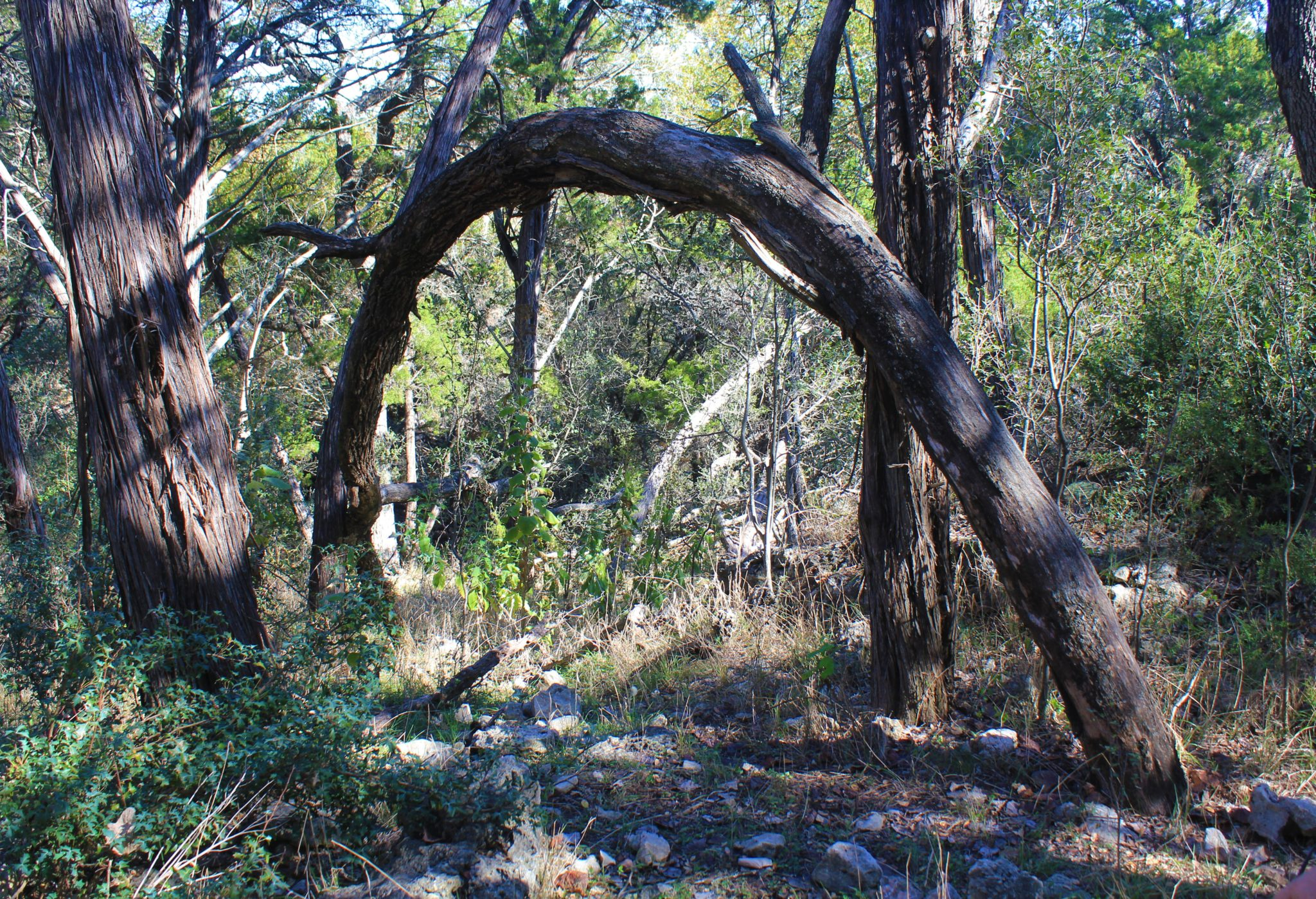 Wooden Arch - Chasing a Dramatic Fall Scene in Texas - Two Worlds Treasures