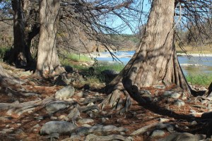 Chasing a Dramatic Fall Scene in Texas - cypress roots - Two Worlds Treasures