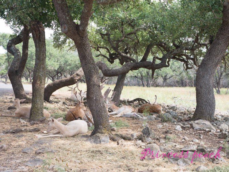 休息中的鹿群