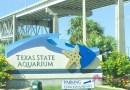 美國: 久違的海豚秀 @ Texas State Aquarium (Corpus Christi, TX)