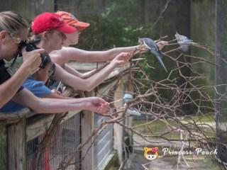 Fort Worth Zoo 餵鸚鵡