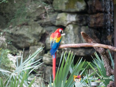 Fort Worth Zoo Macaws 金剛鸚鵡