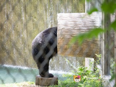 Fort Worth Zoo Black Bear 熊