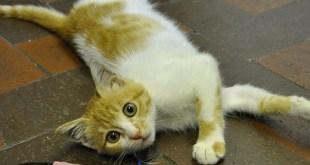 قطة مصرية محظوظة جدا ... من النفايات الى انجلترا !!
