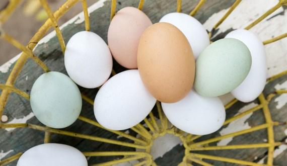 هل تساءلت يوماً حول الفرق بين البيض الأبيض والبني؟ إليك الإجابة