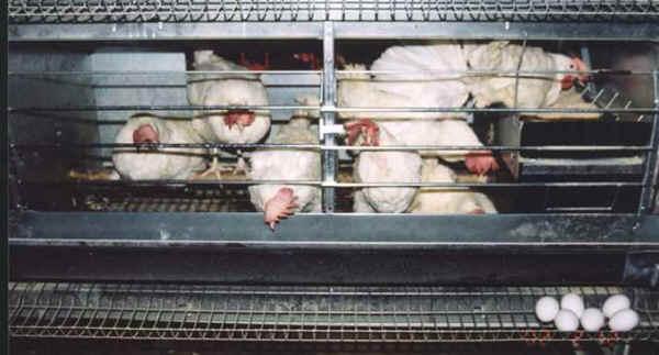 cage-fatigue