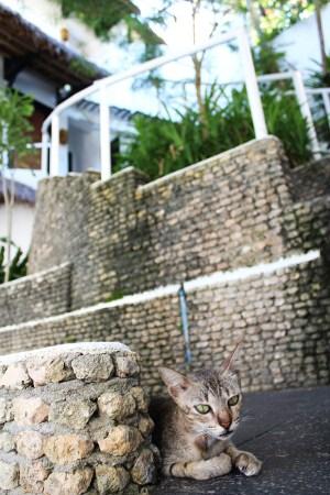 Nami Resorts 29