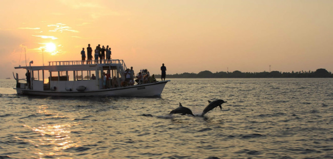 Maldives Dolphin Sunset Cruise