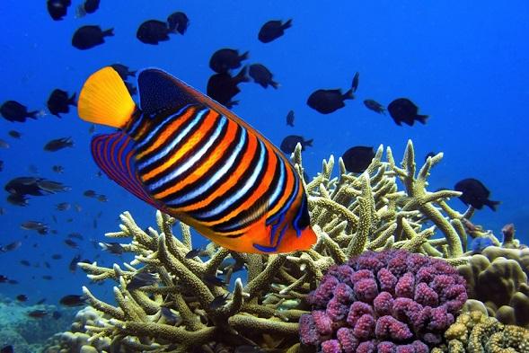 Mauritius Honeymoon - Blue Bay Marine Park - Air Blog Mauritius