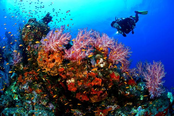 Mauritius Honeymoon - Scuba Diving - Study Abroad blog Palma