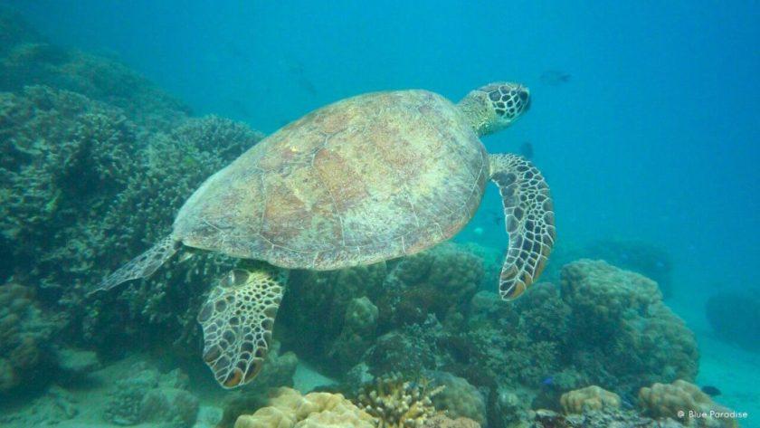 New Caledonia Honeymoon - Baby Turtles - My New Caledonia