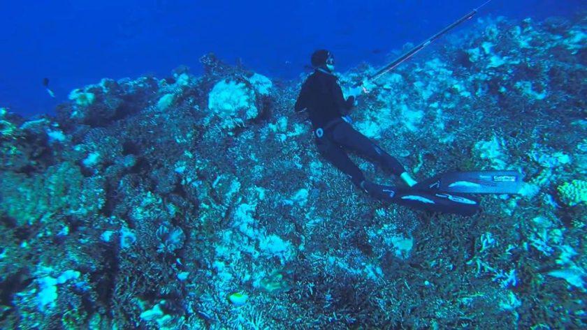 New Caledonia Honeymoon - Underwater Spearfishing - YouTube