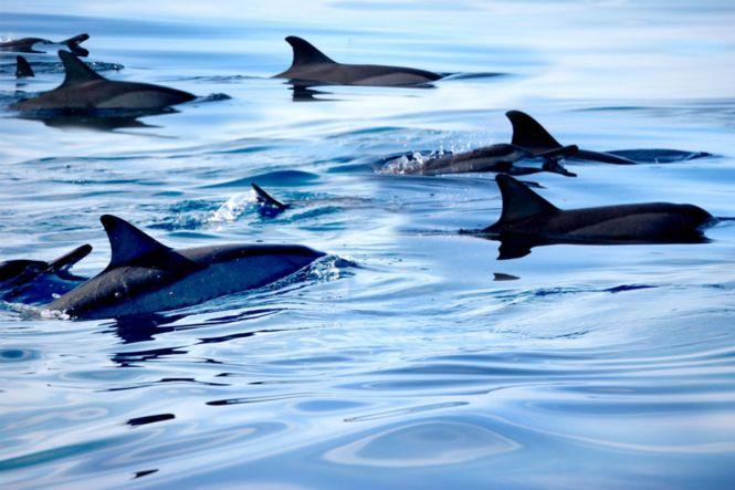 PalawanHoneymoon-Dolphin-PuertoPrincesa