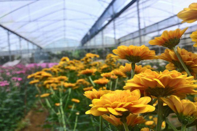 wedding florists Philippines - The Flower Farm