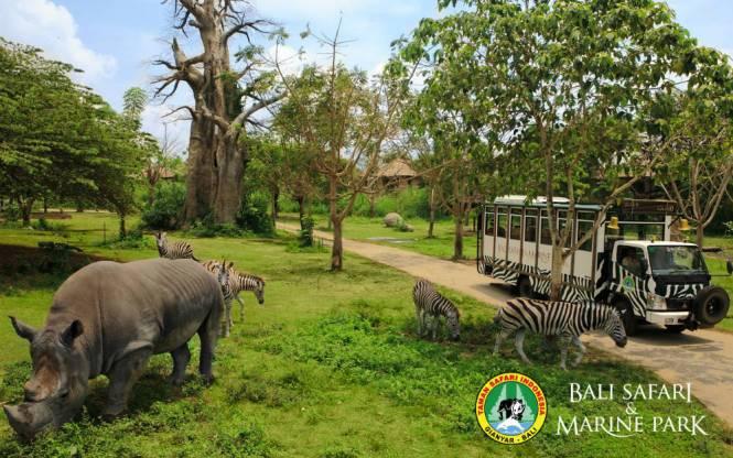Photo via Bali Safari and Marine Park
