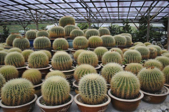 Cactus Valley 3 - WordPress
