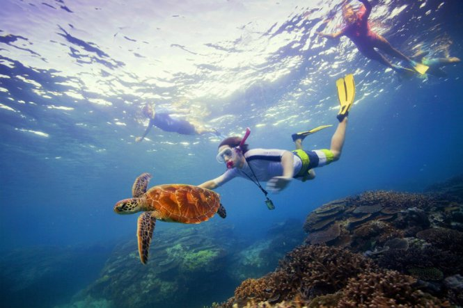 Australia Honeymoon Cairns Great Barrier Reef