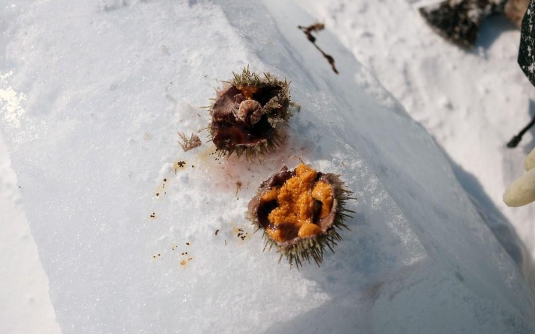 The Sanikiluaq Sea Urchin Expedition