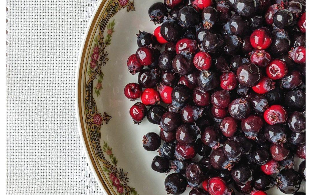 Seasonal Eating: Alberta Fruit for Food Day Canada