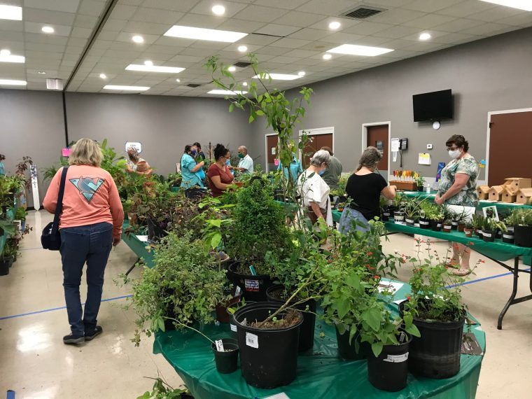 Scrubs Plant Sale 2020