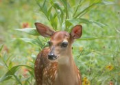 Fawn standing in pocket prairie