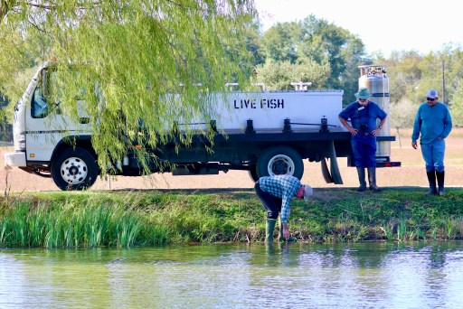 Seabourne Lake restocked with fish,