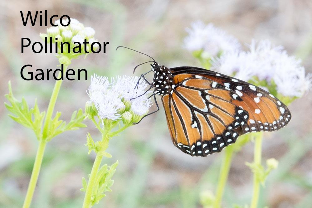 PollinatorGarden_1
