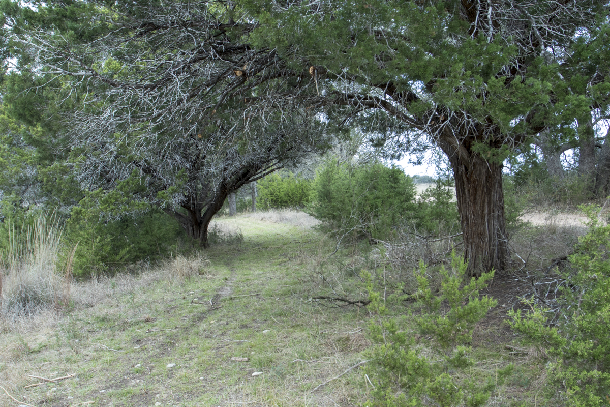 Trail_