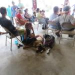 Dogs enjoying the Snake Show