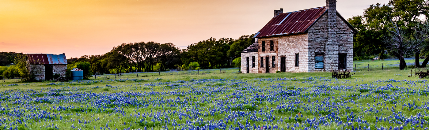 Blue bonnets on TX hillside