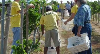 Harvest - Paul leading workers
