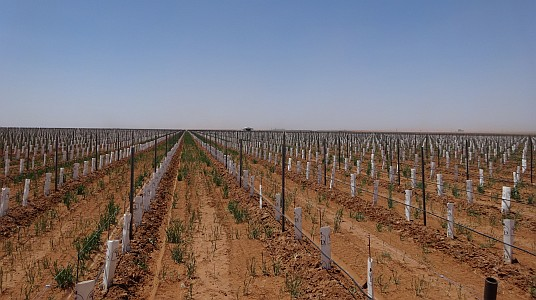Part of the 400 acre vineyard