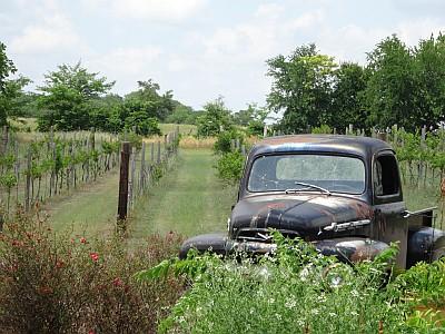 Grayson Hills - vineyard