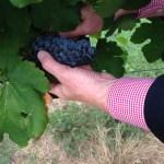 Messina Hof Winery & Resort Hosts 38th Annual Harvest Festival