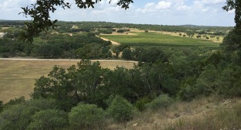 Driftwood Estate Winery view