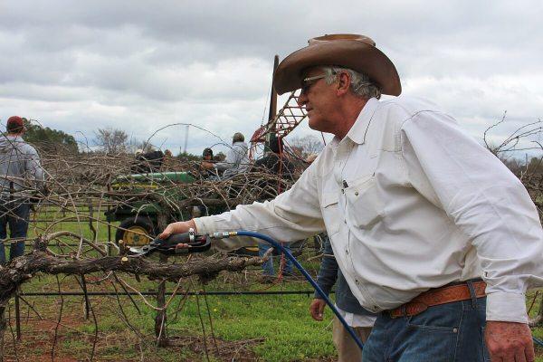 Pierre de Wet pruning