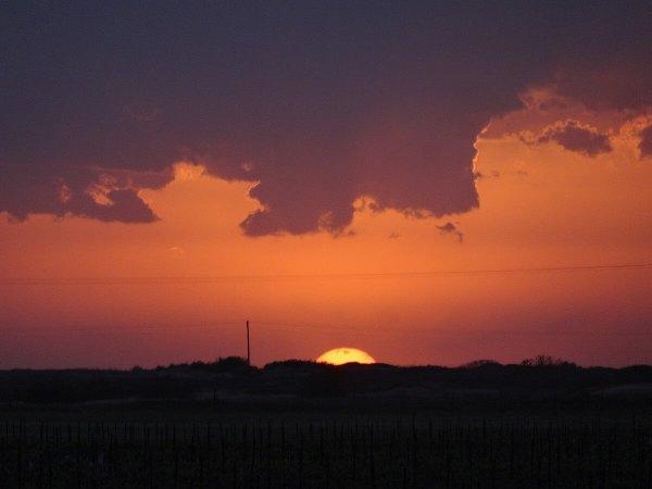 Sunset at Buena Suerte Vineyards