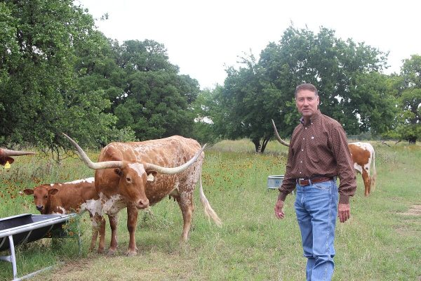 Longhorn cattle with Barry O'Neal