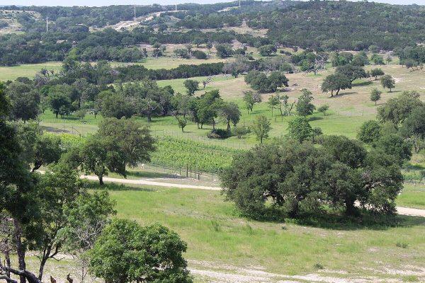 Scimitar Hills Vineyard view