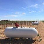 Carl's Epic High Plains Vines to Wine Extravaganza – Part 3