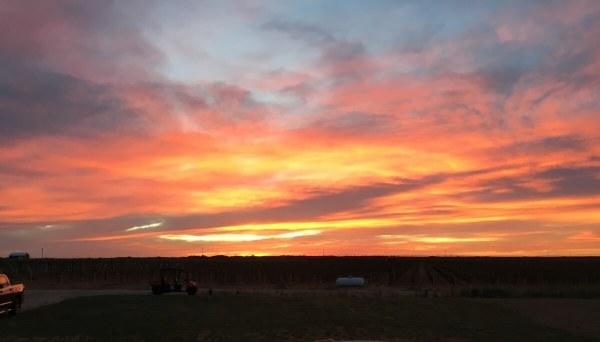A beautiful Texas High Plains Sunset at Buena Suerte Vineyards