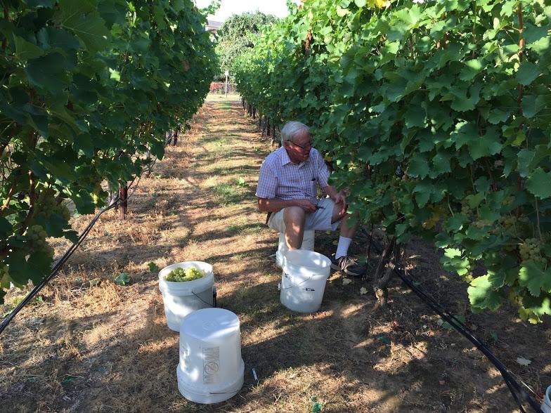 07-17 - Burning Daylight Vineyards