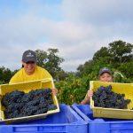 Messina Hof Hosts 41st Annual Harvest Festival