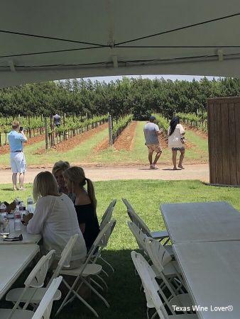Guests walking in the vineyard